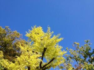 秋晴れに。
